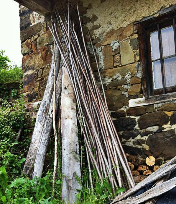 varas de avellano
